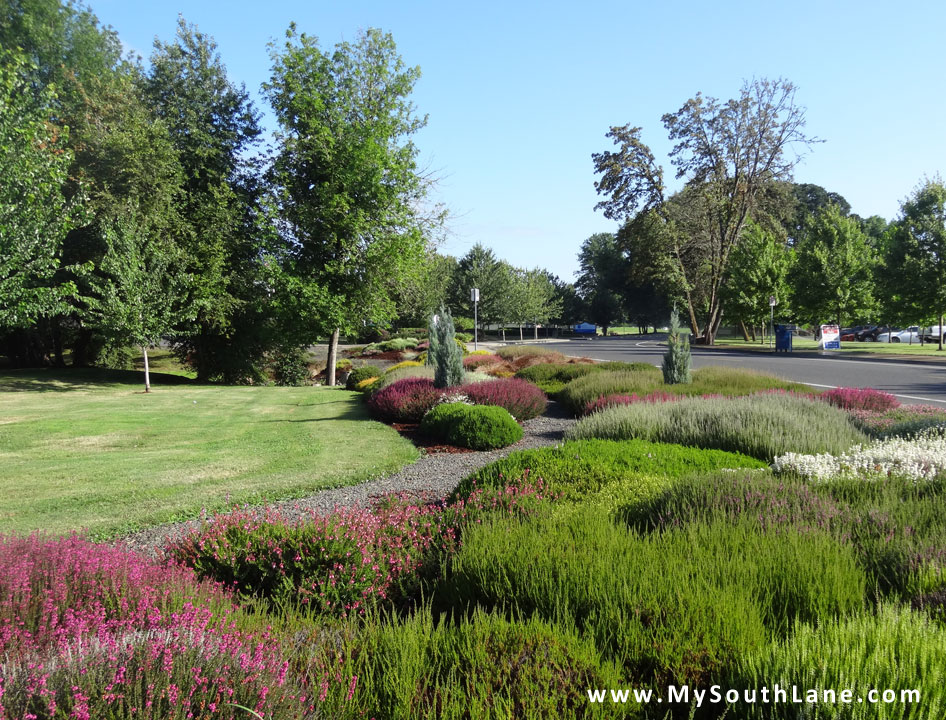 Heather Garden | My South Lane
