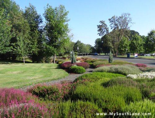 Heather Garden in Cottage Grove