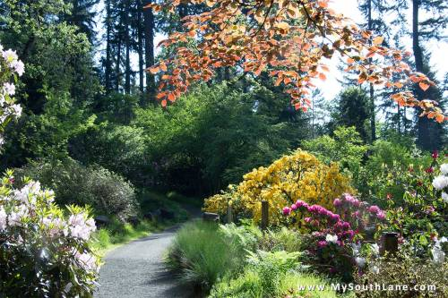 Hendricks-Park-Path