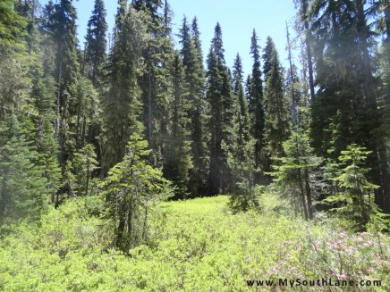 Finding the Marilyn Lakes loop trail.