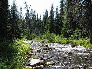 Trapper Creek