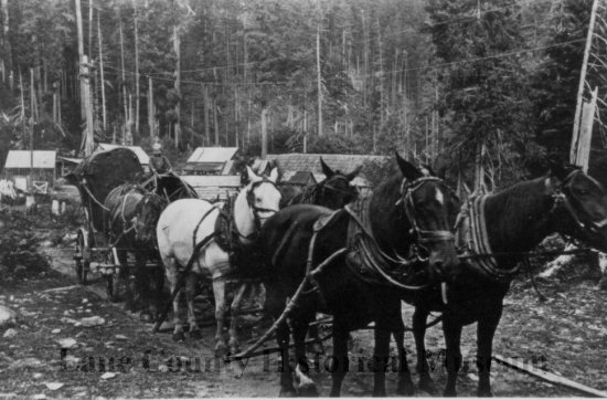 "In 1910, a child holds reins of 6-horse team hauling load from ""The Warehouse""."