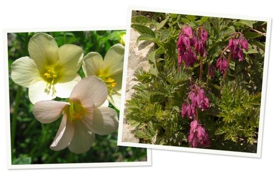 Fairview Peak Wildflowers